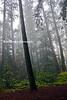dark fog forest_007p