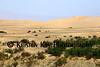 Mesquite dunes 70d_005ms_F