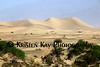 Mesquite dunes 70d_003ms