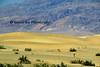 Mesquite Dunes day_003e