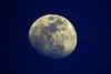 Mesquite Moon_005