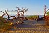 mesquite oldwood p