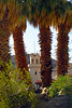 Scotty Castle Palms_001