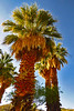 Palms only_001