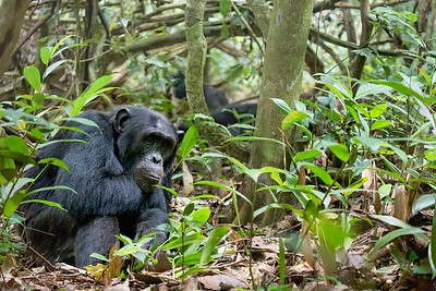 Kibale National Forest, Uganda