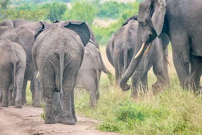 Dusty elephants.