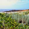 A view of Asilomar Beach and dunes.