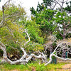 The wooded site of Asilomar.