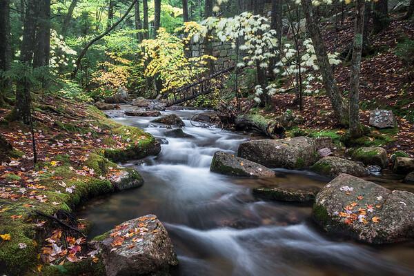 Jordan Creek3