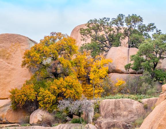 Autumn Tree at Enchanted Rock