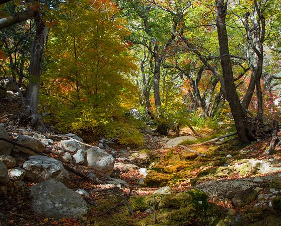 Smith Springs trail