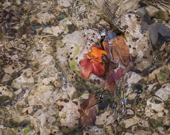 Watery Autumn Leaf