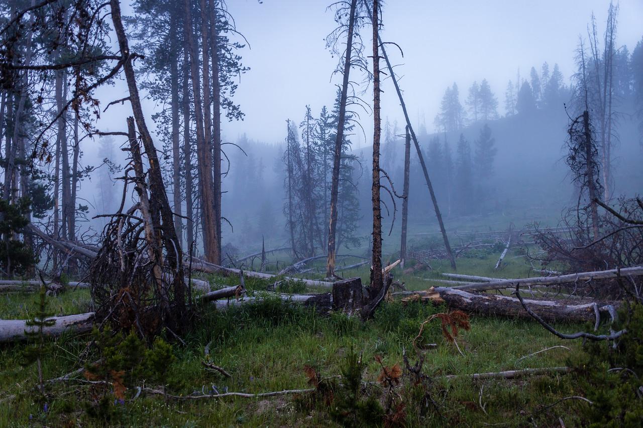 Foggy Morning Woods