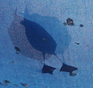 Bird. Poop.