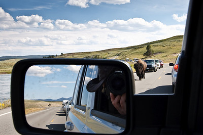 Traffic jams to and fro due to Bison who love to mosey down the highway, avenging the tourists that invade their home.
