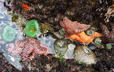 Tidepools at Yaquina Bay