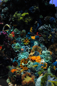 """knitted"" coral reef...LOL"