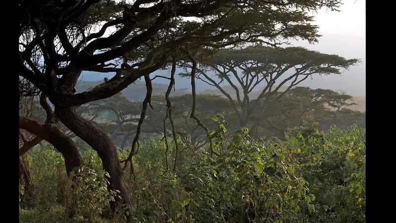 Tanzania Safari 2010 Long 11:30