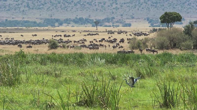 Kenya Safari 2010 Short 3:45