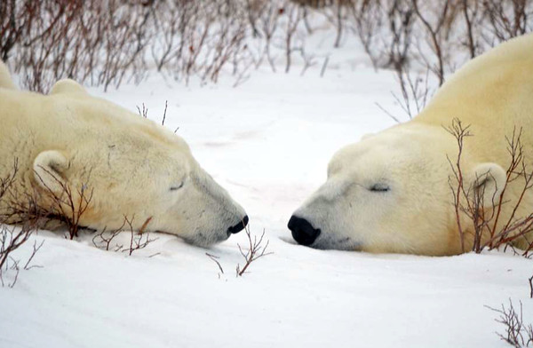 Churchill, Manitoba Trip 2014
