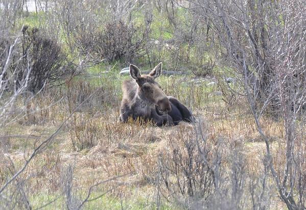 Yellowstone Trip - Spring 2014