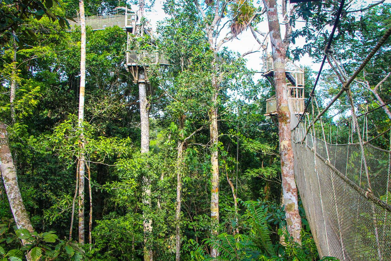 Canopy walkway in the Amaazon rain forest
