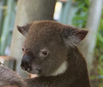 Australia 2015-Cairns
