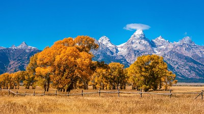 Fall foliage and the Grand Teton mountains.