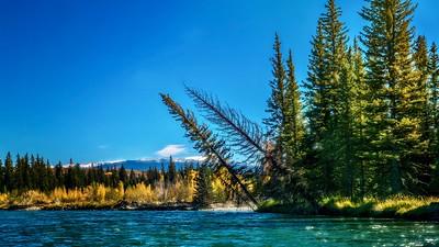 Snake River scenery