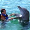 dolphin swim with man