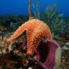 Sea Star and Sponge - Cozumel, Mexico