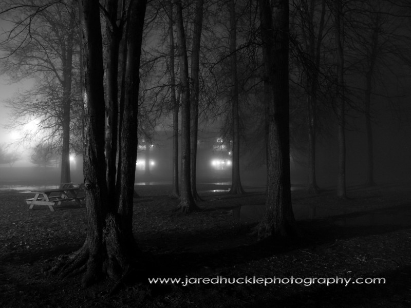 Trees in a night fog