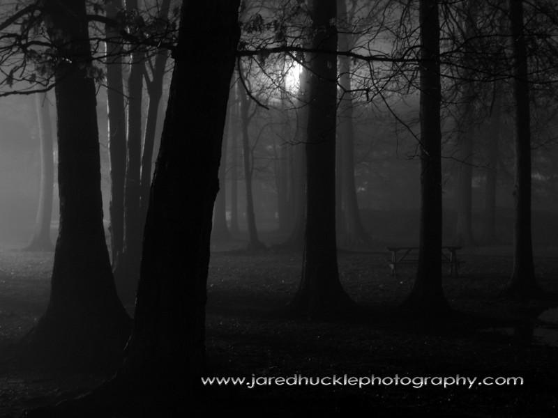 Trees in a night fog