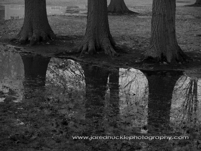 Trees in a fog