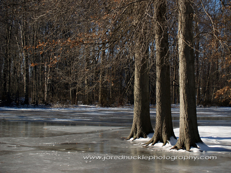 OLYMPUS DIGITAL CAMERA Trees in winter