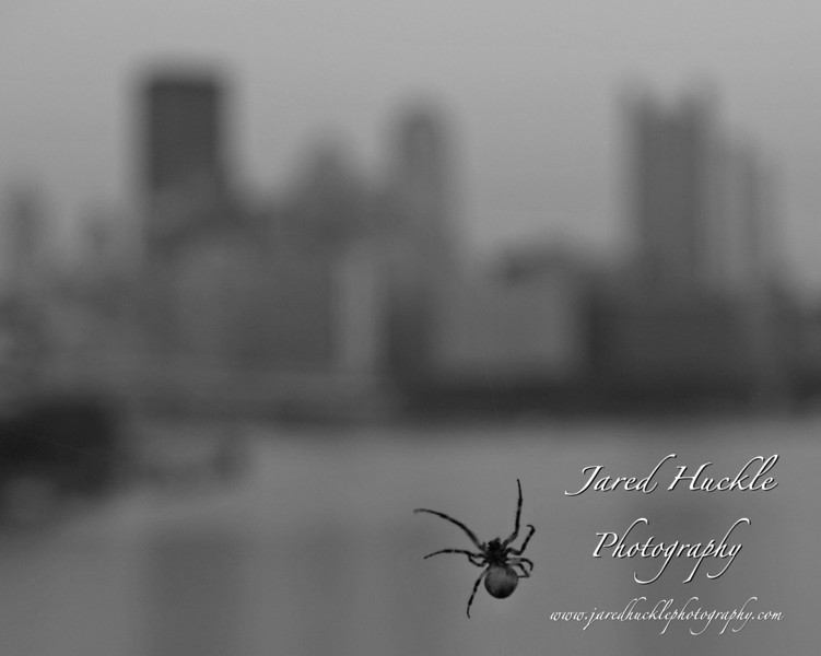 Spider on West End Bridge with Downtown Pittsburgh in the background