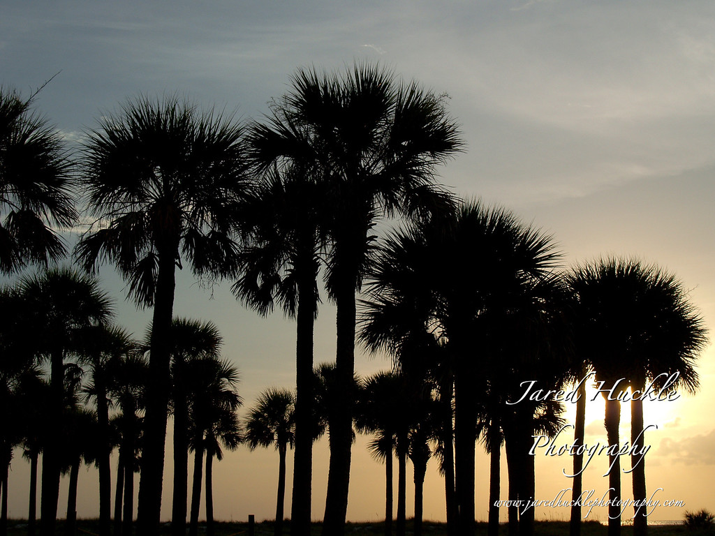 Palm Tree Silhouette, Sand Key Park, FL