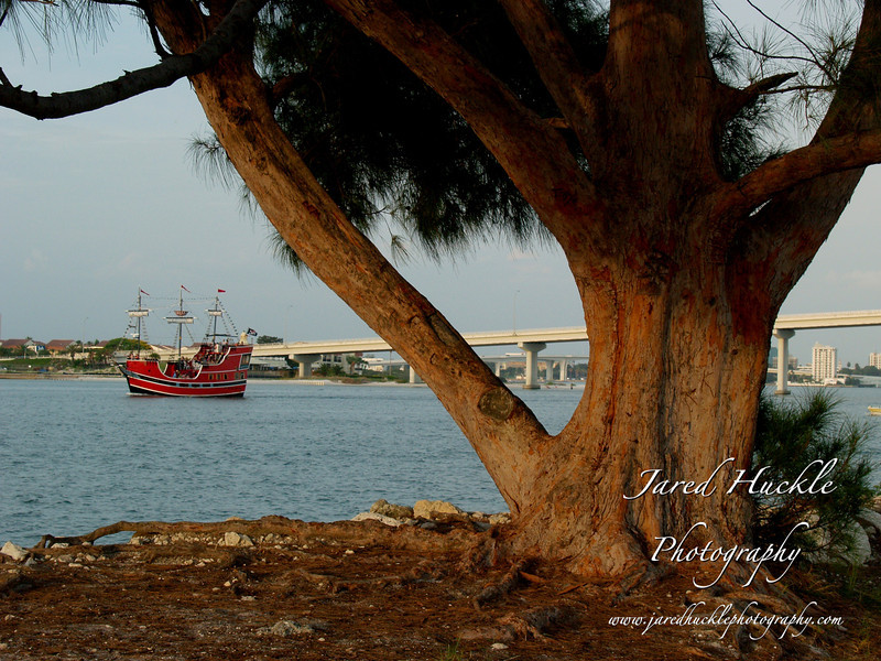Ship and Weathered Tree, Sand Key Park, FL