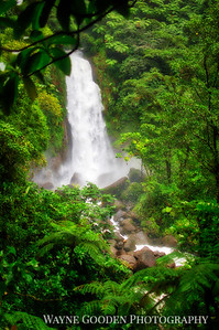 Jungle Waterfall Trafalgar Falls