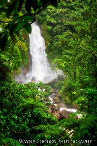 Jungle Waterfall Trafalgar Falls