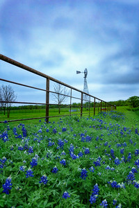 Ennis Bluebonnet Windmil
