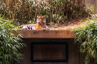 National Zoo, DC