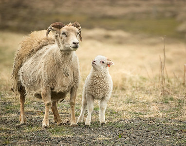 Lamb and Mom