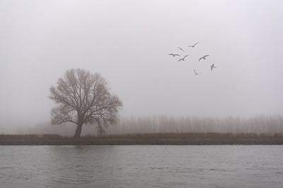 Misty Day in Holland