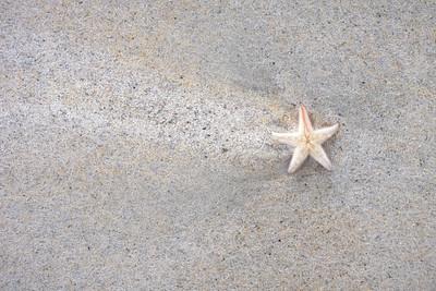 Light Starfish
