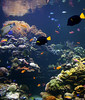 Reef Tank<br /> Atlantis Marine World<br /> Riverhead, NY