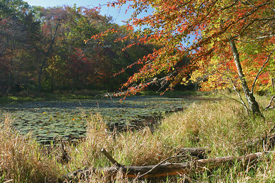Calverton Ponds Fall 2006