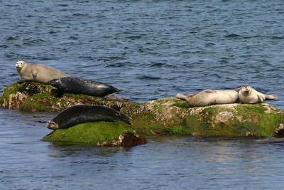 Seal Haul-Out Trail Shortcut