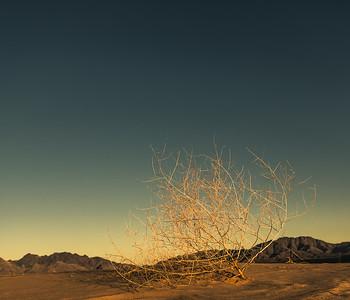 2016 Mojave Desert