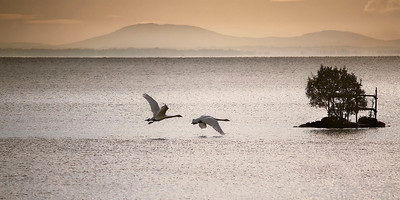 Ballyronan, Lough Neagh, November 2010